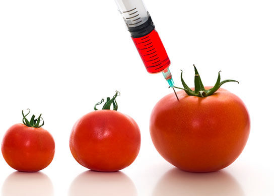 Source: http://www.fitnraw.com/wp-content/uploads/2012/01/GMOTomato.jpg