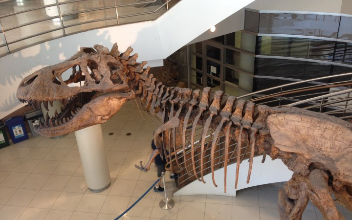 Life size cast of Tyrannosaurus Rex fossil in the Valley Life Science Building