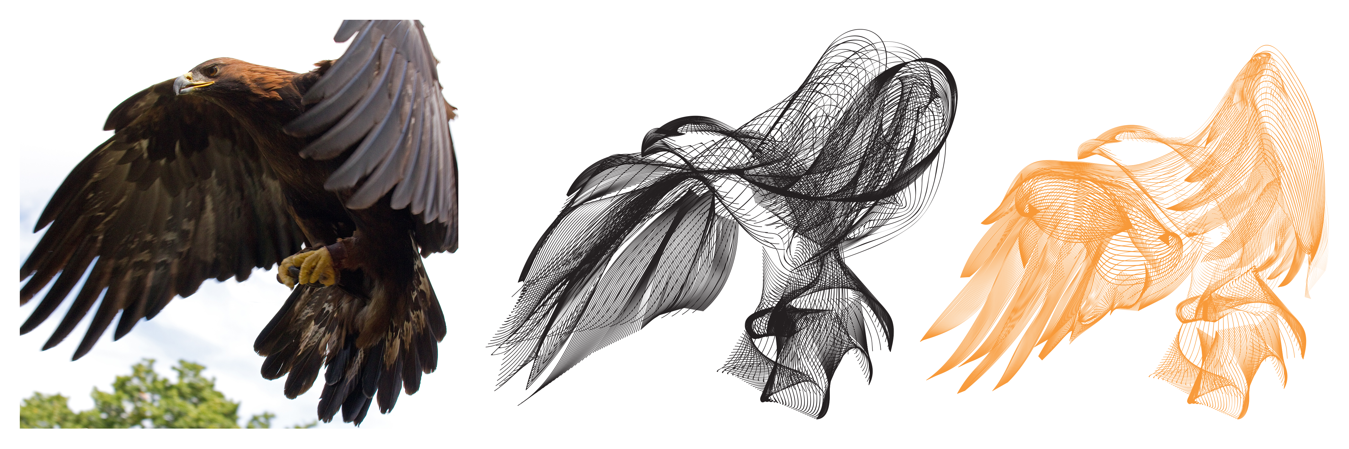 From left to right: original eagle image that was traced, first attempt at the blend tool (apparently this looked like a fish), and final version of the bird for print.