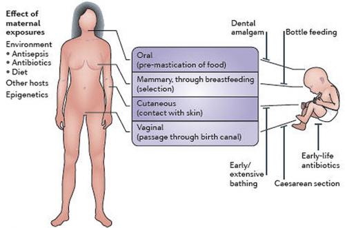 How infants acquire gut microbes. From Cho I, Blaser MJ. (2012).The human microbiome: at the interface of health and disease. Nat Rev Gen. 13(4), 260-270.