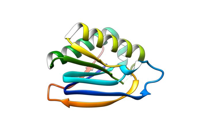 BIF_1, a computationally designed protein.