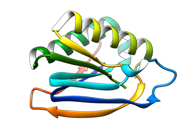 BIF_1, a computationally designed protein.