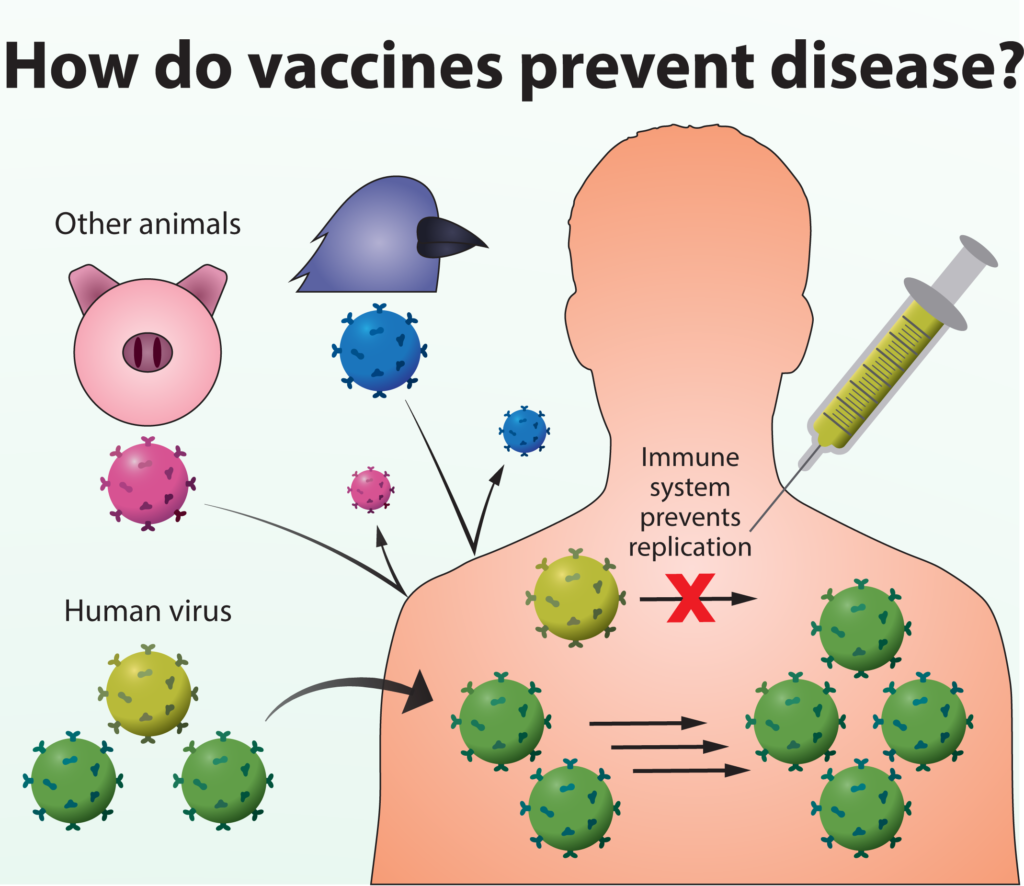 Human virus entering body but vaccine preventing replication of some of them