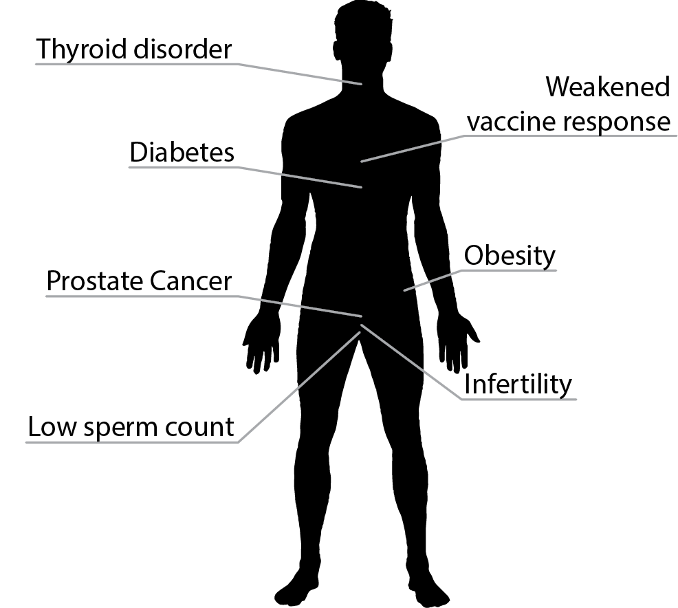 Impacts of exposure to EDCs on males